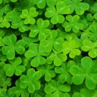 The Legend of the Shamrock PLUS an Easy Craft